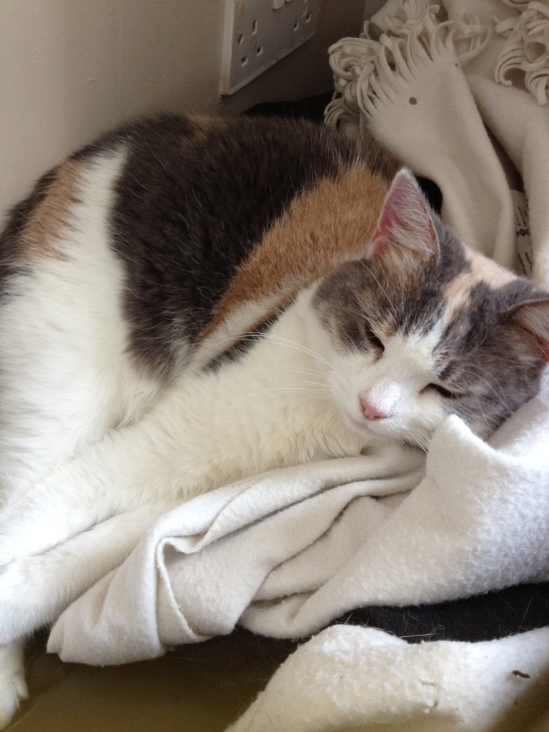 Pebbles cat