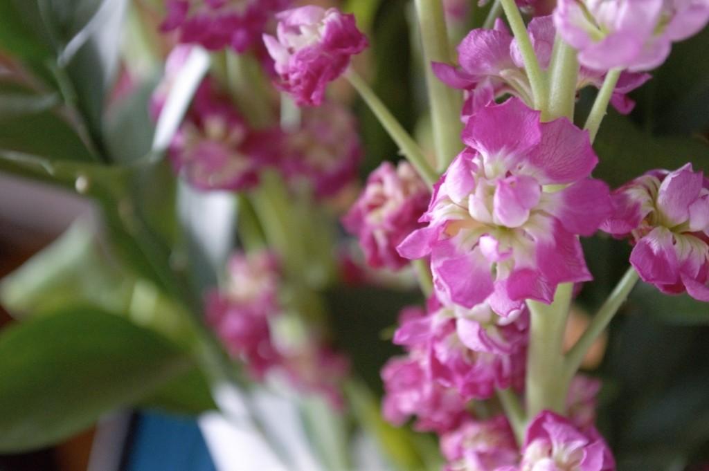 debehams flowers 01