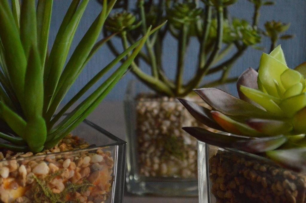 succulent john lewis 02