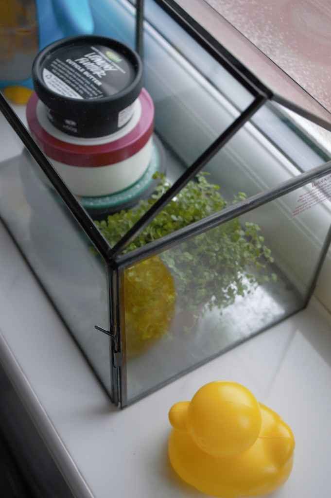 Glasshouse display 06
