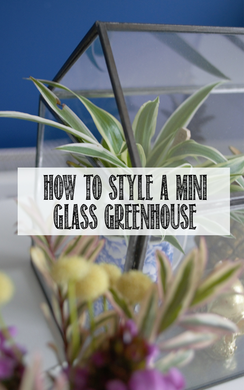 How to style a mini glass greenhouse