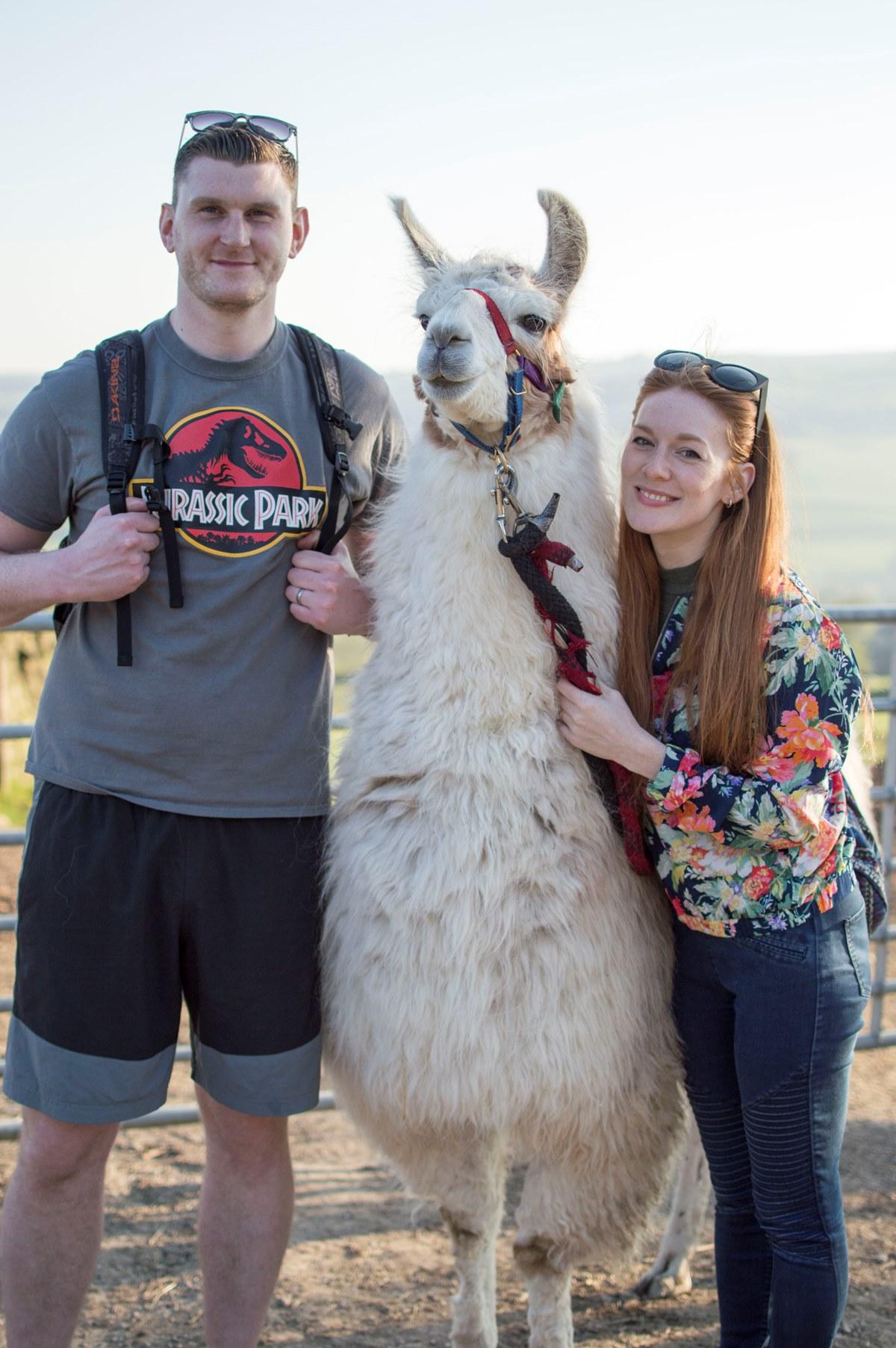 llama trekking nidderdale farms