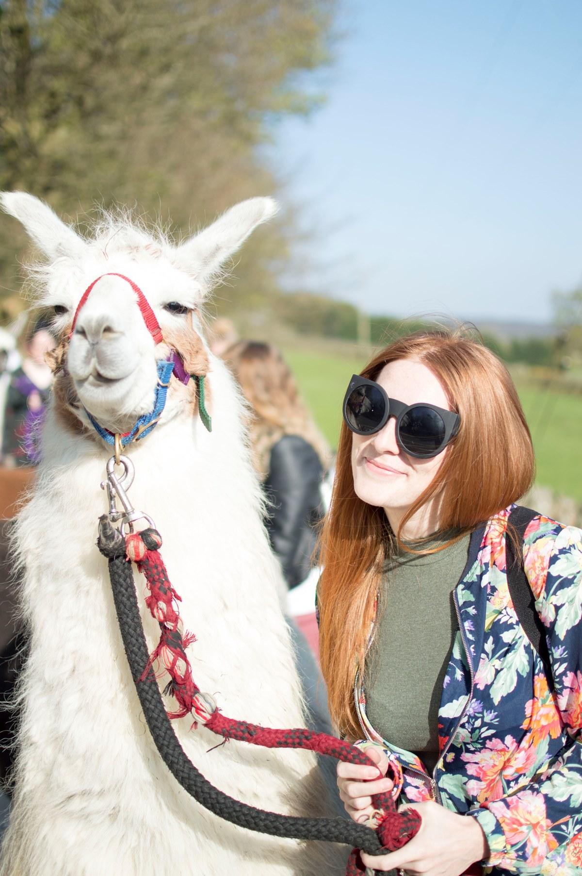 Llama Trekking in Yorkshire (& Vlog!)